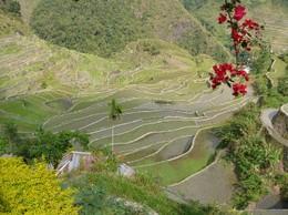 Philippines_cultures_terrase_batad_1